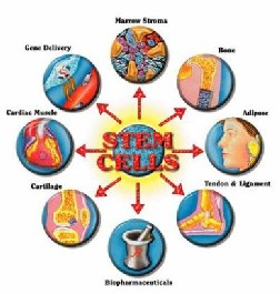 Stem cell initiative image